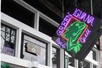Green Iguana image